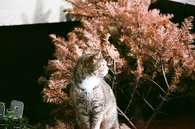 Old feral cat, Grandma, devoted mother - died 2009