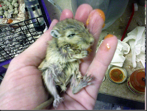 Gaia's Blog: Petsmart Cruelty to Animals