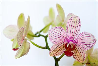 orchidées-mars-2.jpg