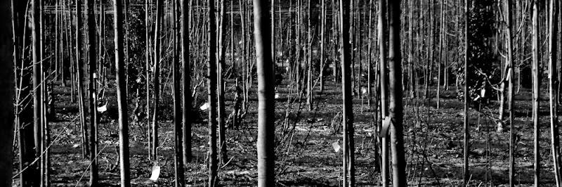 photographie de troncs noir et blanc