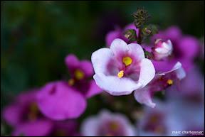 Jardins Secrets - Vaulx-7.jpg
