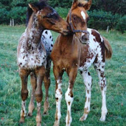 Baby Horses Pictures
