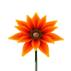 Onix Flowers. Summer. icon