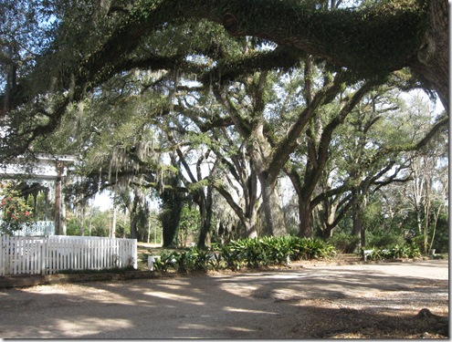 THE MYRTLES 008