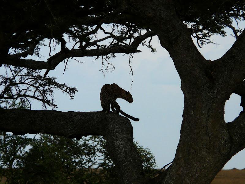 Serengeti, Tanzania, Blog ¿Dónde está Yola?, Entrevista ¿Dónde está Yola?,¿Dónde está Yola?, vuelta al mundo, round the world, información viajes, consejos, fotos, guía, diario, excursiones