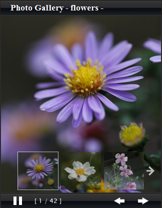 PHOTO GALLERY -FLOWER-