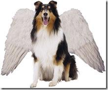 DogWingsC0309_3