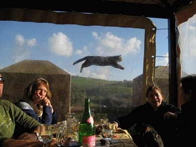 picture of a cat flying through the air