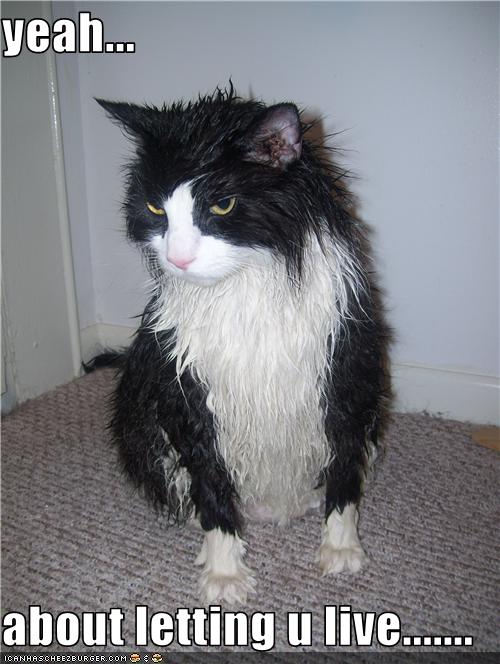 photo of a very angry, wet cat