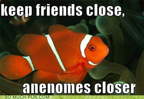 photo of Nemo with a funny caption