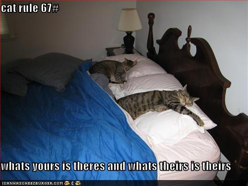 photo of two cats stretched over a bed