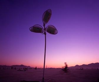 solarflora