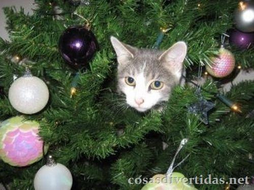 [cosasdivertidas.net  gatos (8)[2].jpg]