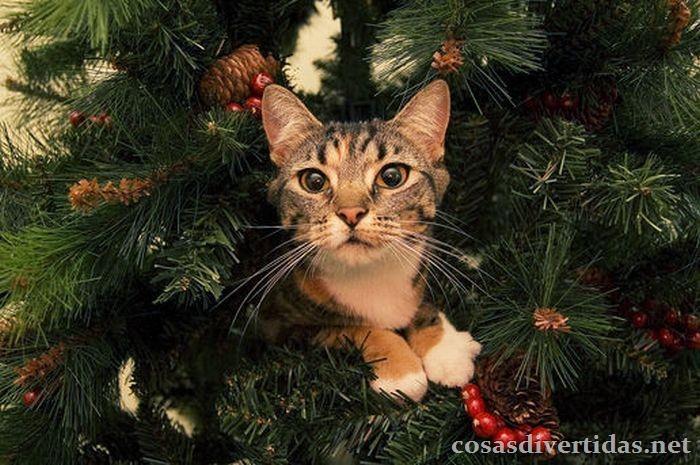 [cosasdivertidas.net  gatos (3)[3].jpg]