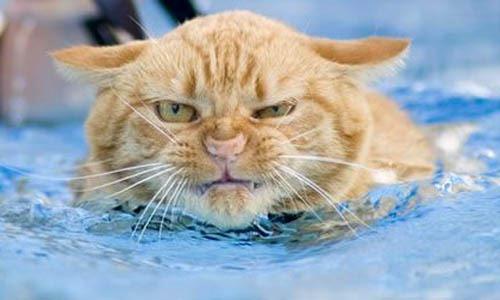 [gatos divertidos cosasdivertidas (5)[2].jpg]