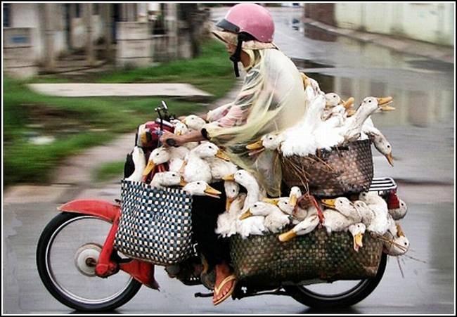 [transporte de mercancias cosasdivertidas (22)[2].jpg]