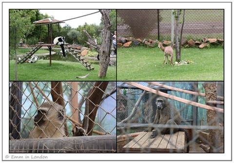 Ruffed Lemur Steenbok Vervet Monkey and Baboon at Emerald Resort Animal World