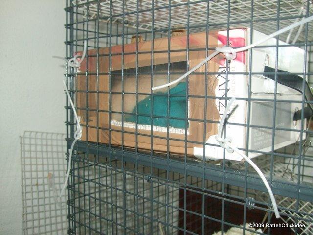 Rodent Toy Activity Ideas Pet Forums Community