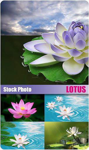 Lotus Cars Wallpapers