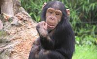 mrsupel.blogspot.com - 5 Hewan Yang Kemampuannya Dapat Menyaingi Manusia
