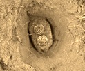 2 Puter Coins 2B Spot-Sheva Apelbaum