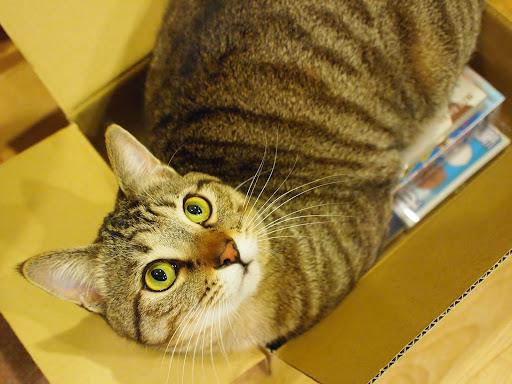 [写真]Amazonの箱を開けたら飛び込んできて我が物顔のグスタフ