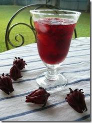 Hibiscus sabdariffa1
