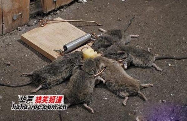 Photos that need no words to laugh - Death of five mice