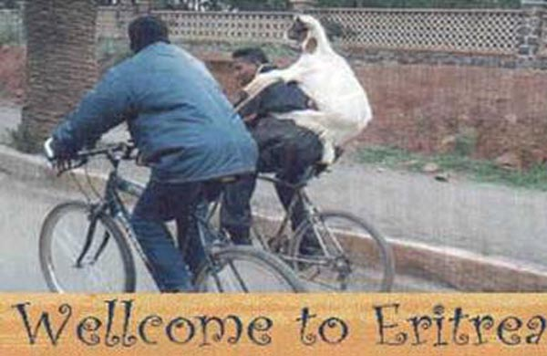 Weekend Fun - Funny things of Africa - Sheep traveling on a cyclist's back