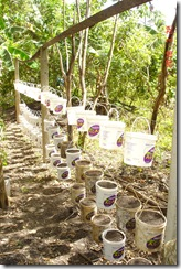 Prepativo Horta Organica Suspensa 2 22-03-10