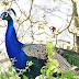 Pfau - Zoo Landau - © info@dester.de