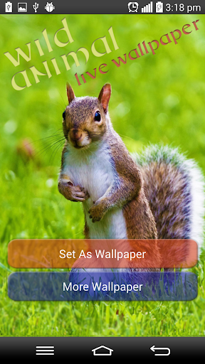 Wild Animal Live Wallpaper