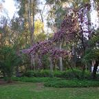 a Parque de María Luisa 12b.jpg