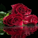 Roses Water Live Wallpaper icon