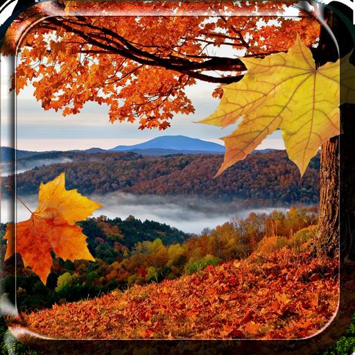 飘落 的树叶 动态壁纸 個人化 LOGO-玩APPs