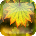 Autumn Leafs Live Wallpaper icon