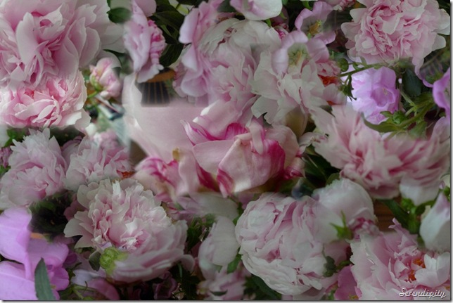peonies for microsoft research_AutoCollage_16_Images