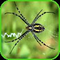 Spider Wallpaper icon