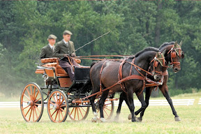 Leather horse harness style 14 carriage driving