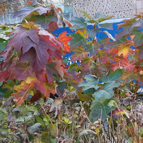 Colorful In Washington Square Park by Angela Theresa Egic - Nature Up Close Other plants (  )