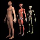 Drill Down Anatomy by WAGmob icon