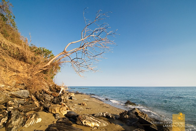 Dead Tree Protruding off a Cliff at Abra de Ilog