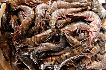 Fresh Prawns at Coron Market