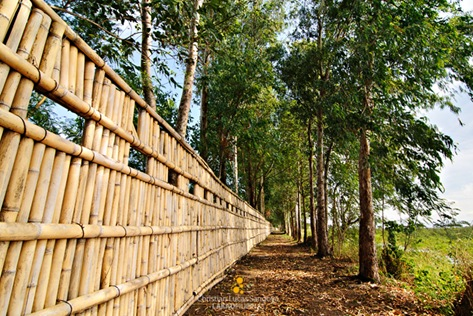 Candaba Bird Fence