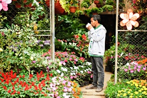 A Vendor Sipping his Morning Coffee at His Plantshop in the Baguio Orchidarium