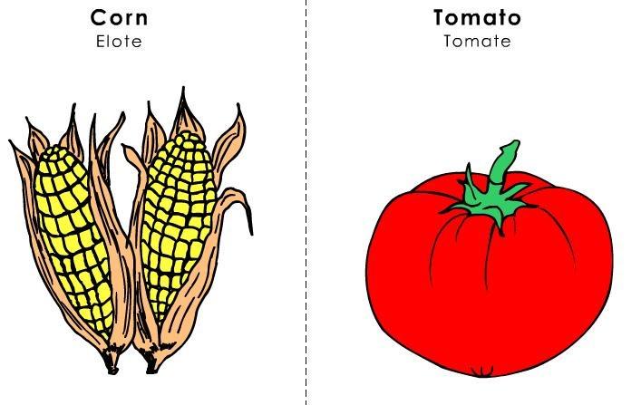 tarjetas ilustradas vocabulario inglés (17)