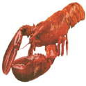 BayLobsters Fish Market icon