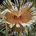 Magnifficent Feather Duster