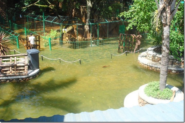 harties animal and snake park