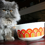 Pyrex bowl and fluffy kitty
